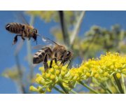 Partnering is key to improve bee health