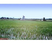 Vietnam eyes water-saving technology for its rice farms
