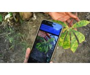 App 'trained' to spot crop disease, alert farmers