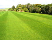Quality Turf Grass & Foliage Maintenance Services