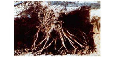 Aqua Sorb - Soil Moist Polymer for Soil Hydration and Retention