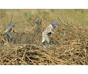 Syngenta expands new planting solutions for sugar cane in Brazil