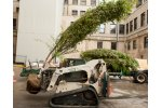 Commercial Tree Planting Services