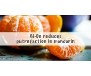 Ethylene removal reduces putrefaction in mandarin oranges