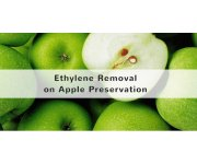 Effects of the elimination of ethylene on apple preservation.