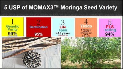 State of the Art Expertise with MOMAX3 Moringa seeds order for plantation for seed oil - Agriculture-4