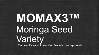 State of the Art Expertise with MOMAX3 Moringa seeds order for plantation for seed oil - Agriculture-3