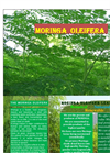 High quality Moringa from CJP