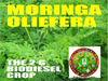 MORINGA PROJECT SERVICES