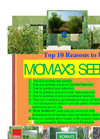 Top 10 reason to use MOMAX3 Moringa seed for oil seed plantation
