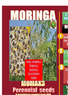 MOMAX3 Perennial Moringa improved seeds