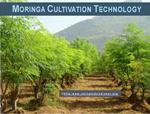 Moringa Cultivation Technology
