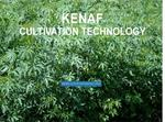Kenaf Cultivation Technology