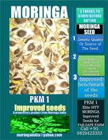 Elite - Model 2018 - True-to-Type Moringa Class 1 PKM1 Seeds