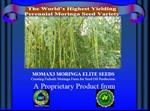 MOMAX3 - Model 2018 - Moringa Perennial Seed for  seed oil plantation
