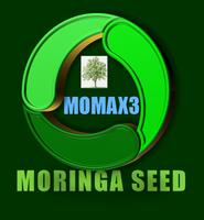 MOMAX3 - Model 2019 - Moringa Perennial Seed for seed oil plantation