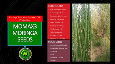 Moringa India - Model 2018 - Momax3 Moringa Perennial Seed For Plantation For Seed Oil