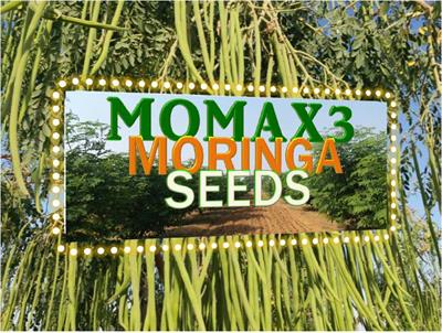 MOMAX - Model 2019 - MOMAX3SAP™ Moringa Plants Saplings