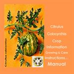 C. colocynthis Growing & Care Instruction Manual