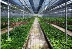 Carbon Dioxide Sensing for Controlled Environment Horticulture - Agriculture - Horticulture