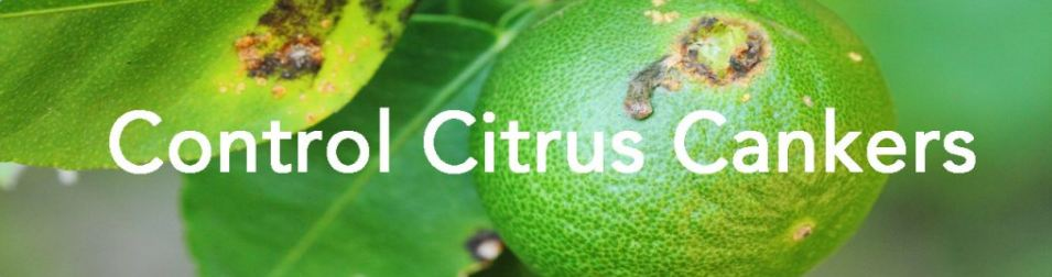 Jenfitch - Chemical for Controlling Citrus Cankers