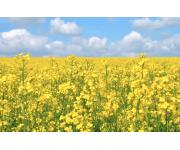 Record breaking rapeseed crop last month – liquid fertiliser tanks bring savings