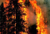 Forest fires help power the nitrogen cycle
