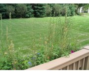 Nitrogen fertilizers` impact on lawn soils