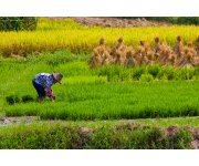 Balancing food security and environmental quality in China