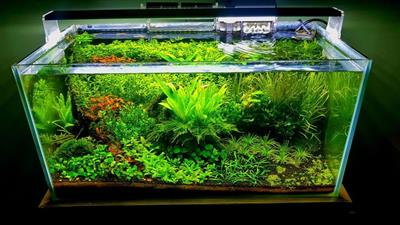 Aquascaping Market Trend Evaluation & Future Forecast during the Period 2018-2024