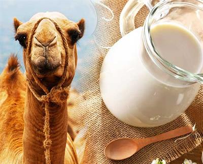 New product developments and trends of Camel Milk Market during 2018-2024