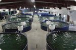 Aquaculture Services