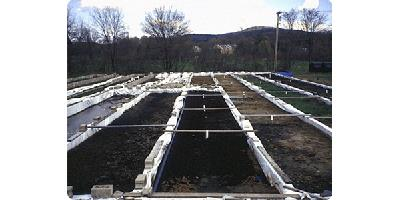 Aquacare - Wetland Fish Farm Effluent Treatment Systems