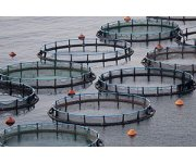 High-Quality Pumps Help Fish Farms Handle Growth