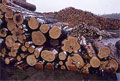 Russia plans timber tracking to control illegal logging