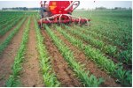 Row Crop Liquid Manure Spreaders
