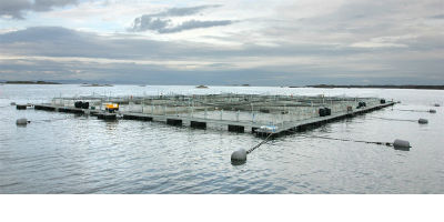 Steel Aquaculture Cages