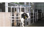 Automatic Dairy Cow Sorting System
