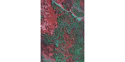 Aerial Surveys for Forestland Management - Agriculture - Forestry