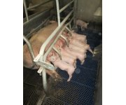 Levucell SB improves sow's feed intake in lactation: Results of a meta-analysis