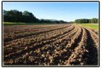 Tillage Sweeps System