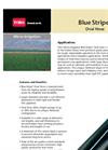 Blue Stripe - Oval Hose Polyethylene Tubing Brochure