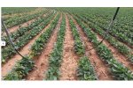 Precision Mobile Drip Irrigation System (PMDI)