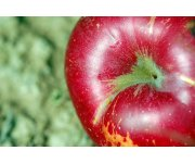 Select groundcover management systems found viable for organically managed apple orchard