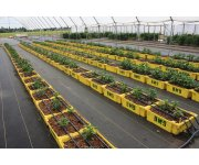 Optimal substrate moisture content determined for high-quality bedding plants