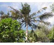 Fertilization regimen reduces environmental impact of landscape palms