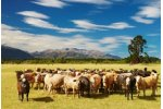 Livestock Production Recruiting