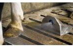 Cattle Claw Clean System (CCS)