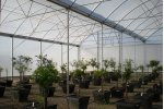 Insulator Commercial Greenhouse