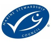 MSC congratulates: North Sea saithe catch recertified as sustainable
